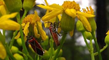 IMAG2315 bugs crop
