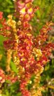 IMAG2414 flower