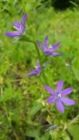 IMAG2428 flower