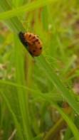 IMAG2443 bug