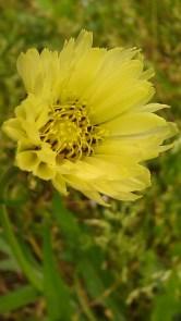 IMAG2461 flower