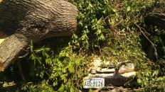 IMAG2646 april 28 Tanya Mikulas Tuscaloosa tornado 2011