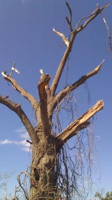 IMAG2653 april 28 Tanya Mikulas Tuscaloosa tornado 2011