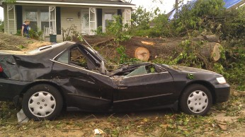 A tree smashed a Honda in front of my house. (Tanya Mikulas, photographer)