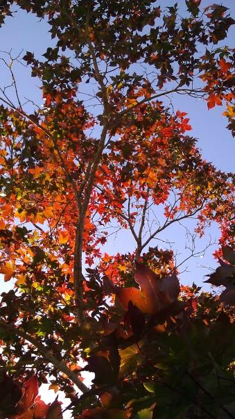 IMAG3037 tree may 4 Tanya Mikulas Tuscaloosa tornado 2011