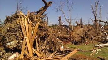 IMAG3071 tree may 4 Tanya Mikulas Tuscaloosa tornado 2011