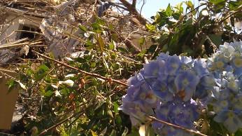 IMAG3125 flowers may 6 Tanya Mikulas Tuscaloosa tornado 2011