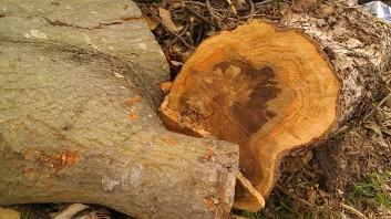IMAG3199 may 8 Tanya Mikulas Tuscaloosa tornado 2011
