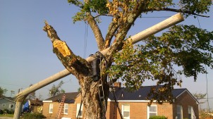IMAG3222 pole may 9 Tanya Mikulas Tuscaloosa tornado 2011