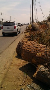 IMAG3349 sidewalk may 12 Tanya Mikulas Tuscaloosa tornado 2011