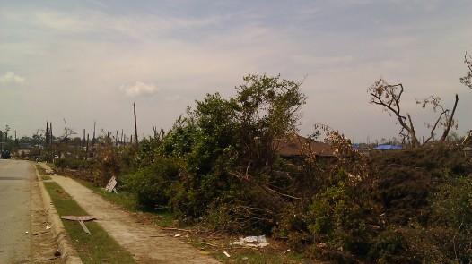 IMAG3359 wisteria may 12 Tanya Mikulas Tuscaloosa tornado 2011