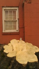 IMAG3541 house