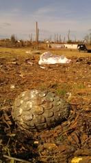 IMAG3650 may 18 Tanya Mikulas Tuscaloosa tornado 2011