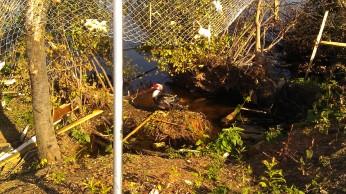 IMAG3655 may 18 Tanya Mikulas Tuscaloosa tornado 2011