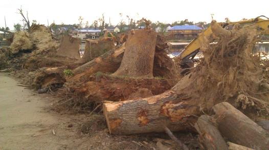 IMAG3855 root balls may 24 Tanya Mikulas Tuscaloosa tornado 2011