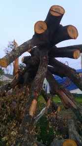 IMAG3858 tree may 24 Tanya Mikulas Tuscaloosa tornado 2011
